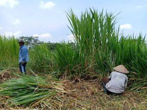 produksi lahan tanaman